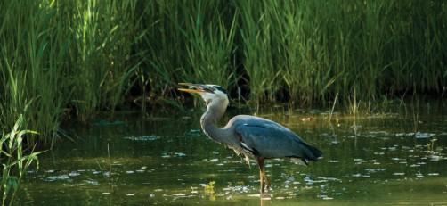 Wetlands Crane